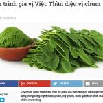 Thanh Niên đưa tin: Hành trình gia vị Việt: Thần diệu vị chùm ngây