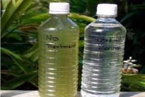 Hạt chùm ngây lọc nước, tiêu diệt khuẩn