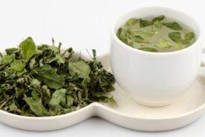 Cách làm trà từ cây chùm ngây