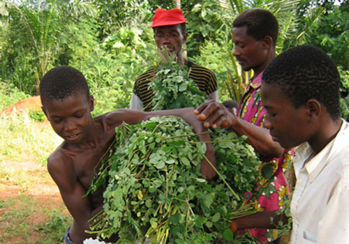 Do hàm lượng dinh dưỡng cao của nó, chùm ngây cũng là một nguồn thực phẩm quan trọng ở một số nơi trên thế giới