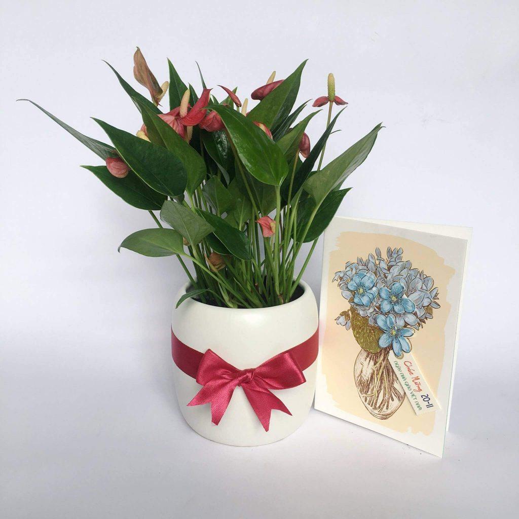 Đối với hoa đỏ, tím: dùng chậu men trắng, xanh ngọc, vàng.