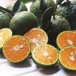 Top 3 cách trị sẹo lõm bằng trái cây siêu hiệu quả tại nhà
