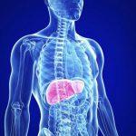 Vai trò và chức năng của gan trong cơ thể cơ thể con người