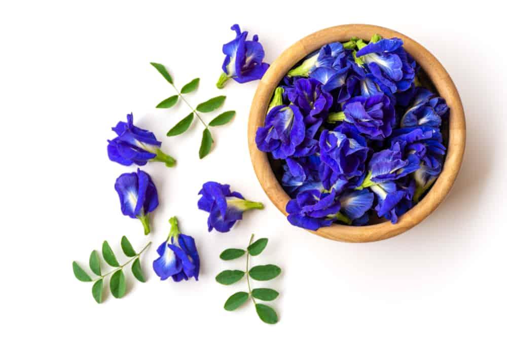 Hoa đậu biết giúp làm đẹp vô cùng hiệu quả
