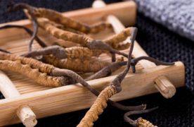 Uống đông trùng hạ thảo có tác dụng gì