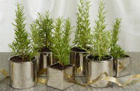 Cây hương thảo giúp  khử bớt mùi hôi, thanh lọc không khí, xua đuổi muỗi ruồi