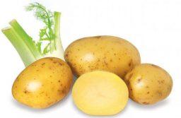 Khoai tây là nguồn thực phẩm giàu giá trị dinh dưỡng, cung cấp vitamin, tốt cho sức khỏe.