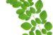Công dụng của cây chùm ngây – khám phá mới giúp bạn có sức khỏe tốt hơn